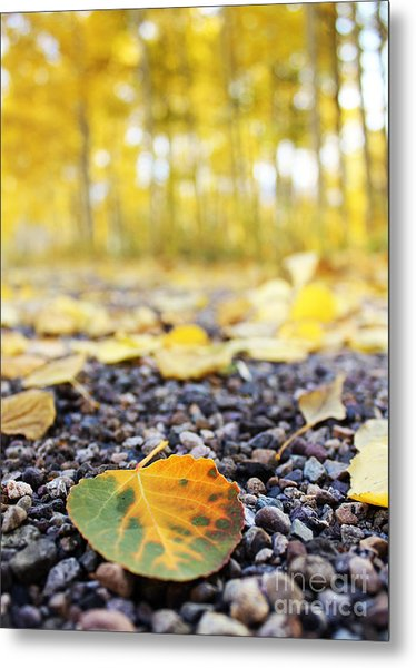 Metal Print featuring the photograph Fallen Leaf by Kate Avery