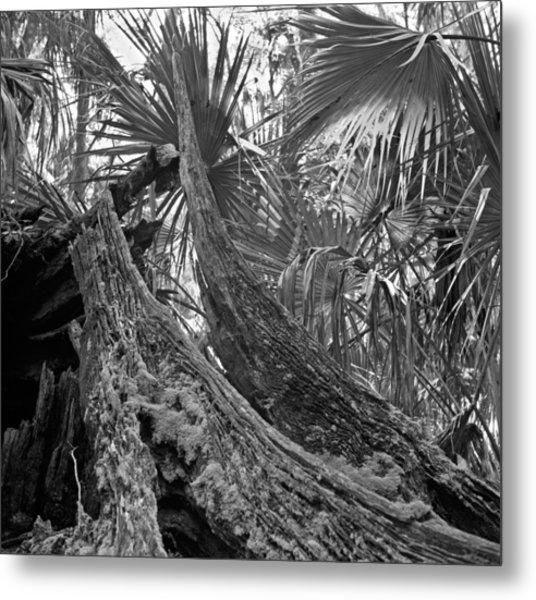 Fallen Tree. Highlands Hammock S.p. Metal Print