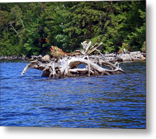 Fallen Tree In A Lake Metal Print