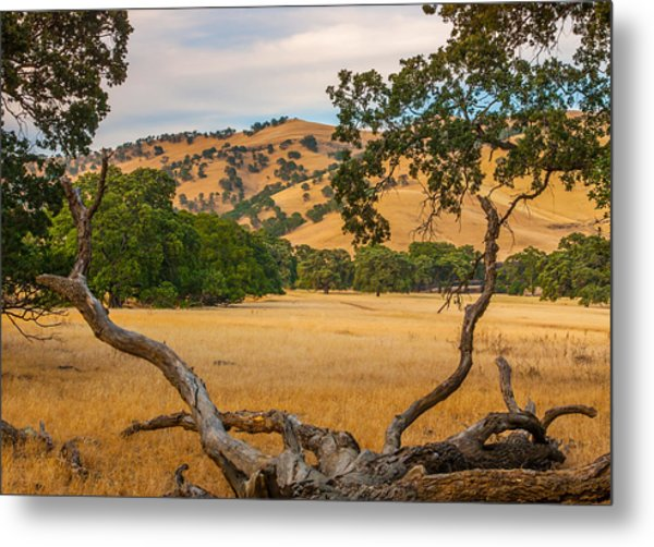Fallen Tree With A View Metal Print