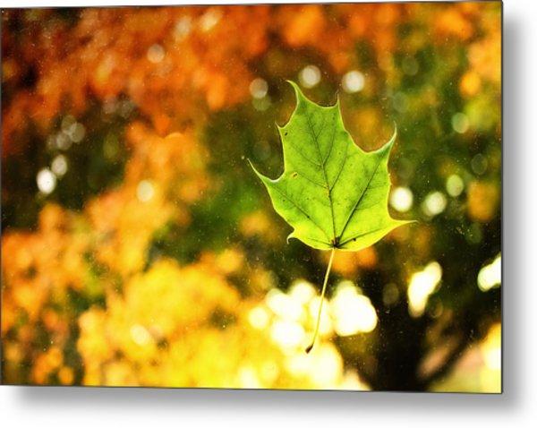 Falling Leaf Metal Print