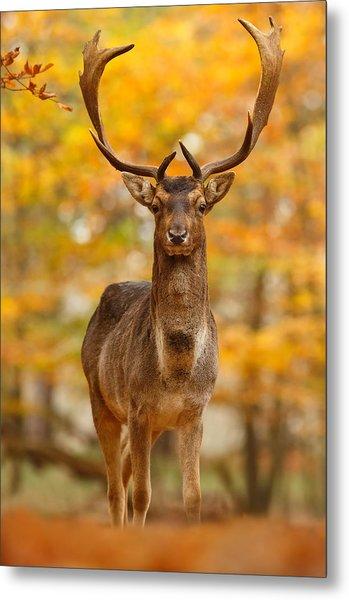 Fallow Deer In Autumn Forest Metal Print