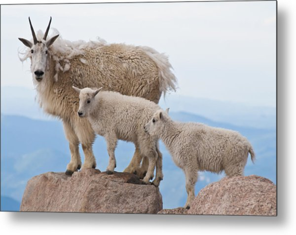 Family Photo Time Metal Print by Mike Berenson
