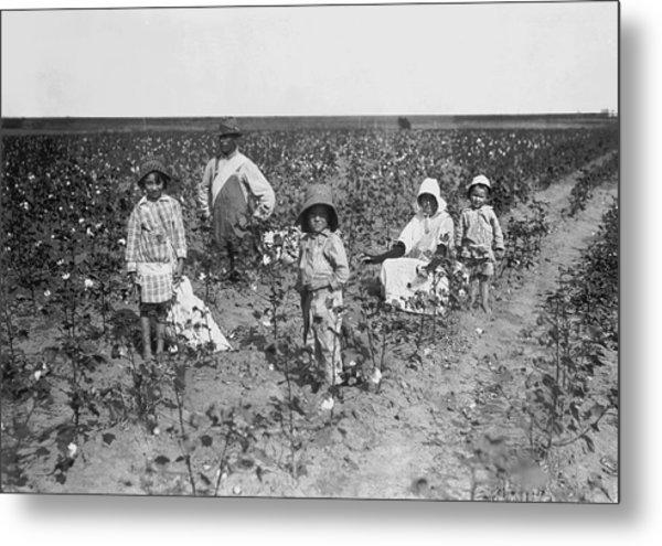 Family Picking Cotton Metal Print