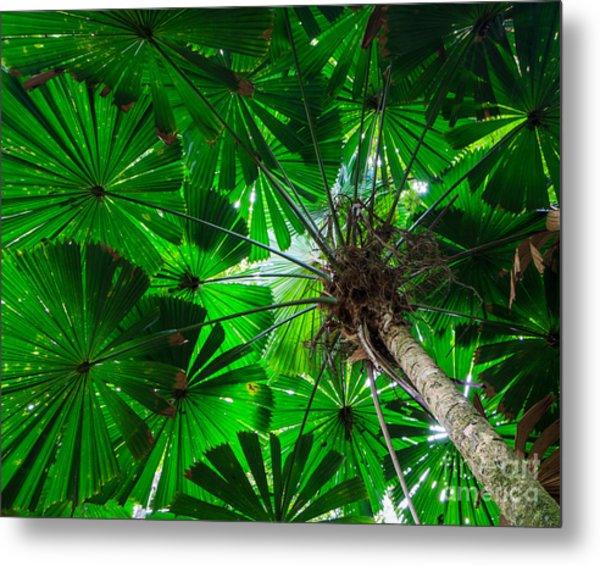 Fan Palm Tree Of The Rainforest Metal Print