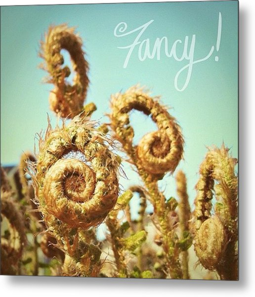 Curly Fern Fronds Metal Print