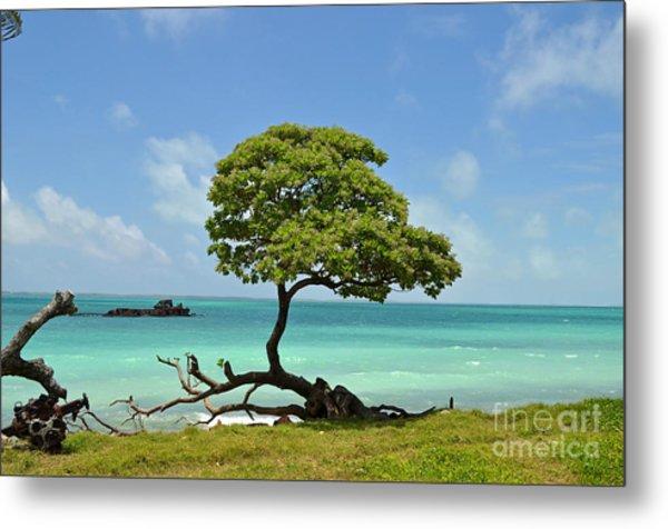 Fanning Tree On Beach Metal Print