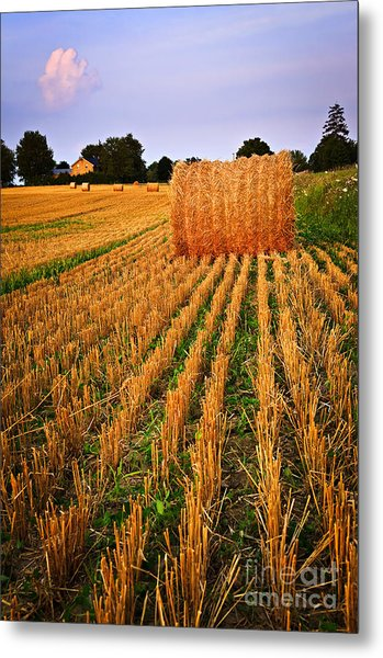 Farm Field With Hay Bales At Sunset In Ontario Metal Print