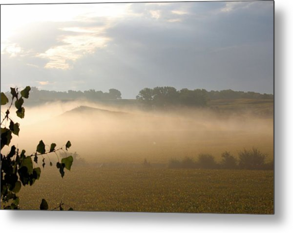 Farm Morning By Angieclementine Metal Print by Angie Phillips