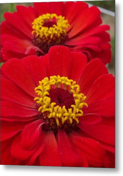 Farm Stand Flowers Metal Print