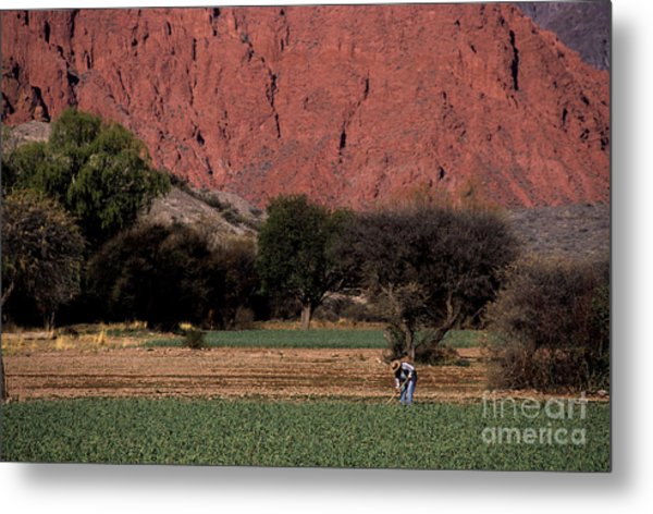 Farmer In Field In Northern Argentina Metal Print
