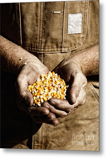 Farmer's Hands With Seed Corn Metal Print
