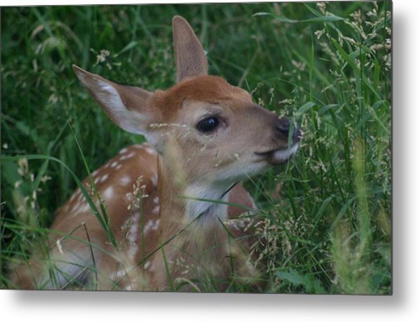 Fawn In Weeds Metal Print
