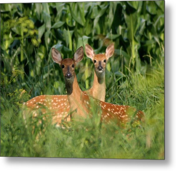 Fawns Crossed Metal Print