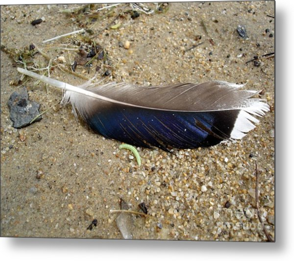 Feather And Inchworm Metal Print