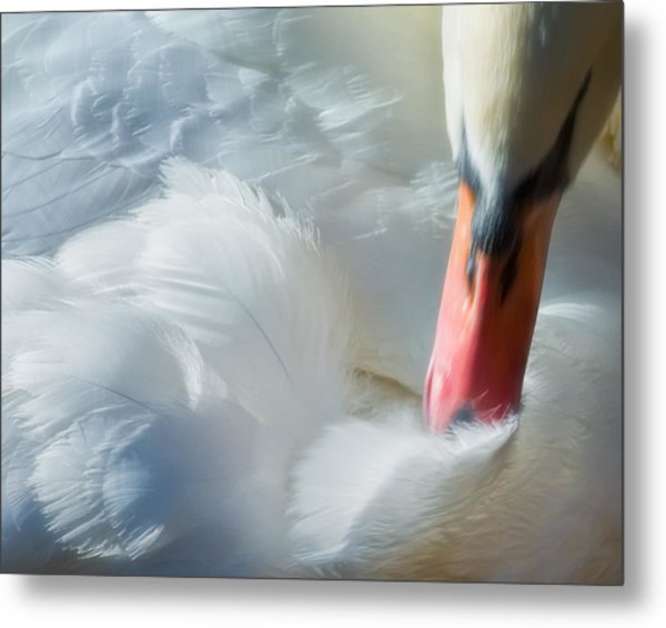 Feather Flufifng Metal Print