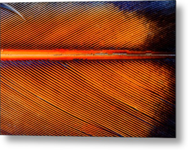 Feather Of A Flicker Metal Print