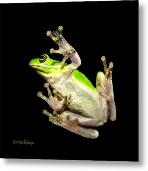 Feathered Frog Metal Print