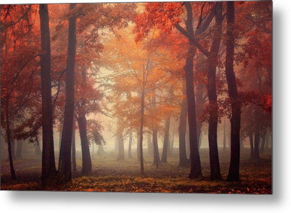 Feel Metal Print by Ildiko Neer