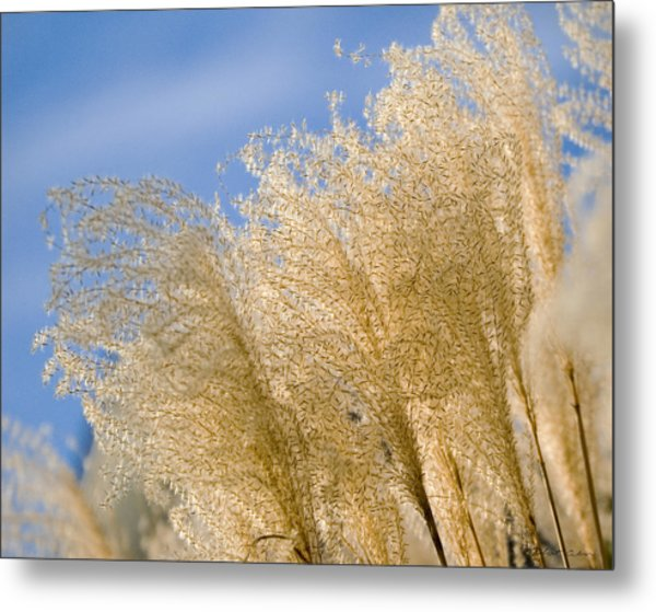 Feel The Breeze Metal Print
