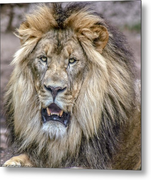 Feeling Like A King Metal Print