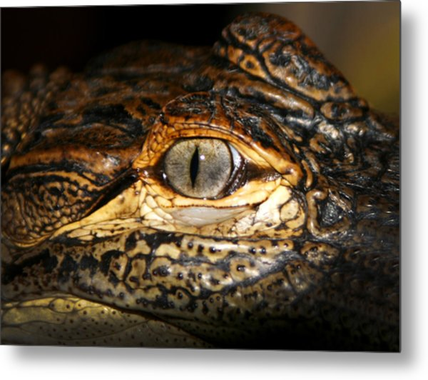 Feisty Gator Metal Print