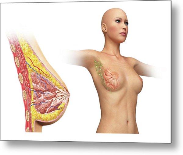 Female Breast Metal Print