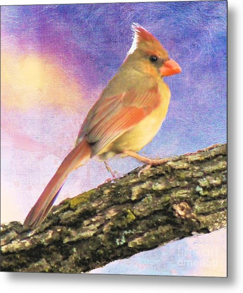 Female Cardinal Away From Sun Metal Print