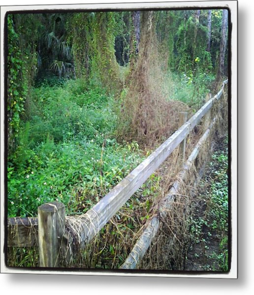 Fence Metal Print by Chasity Johnson