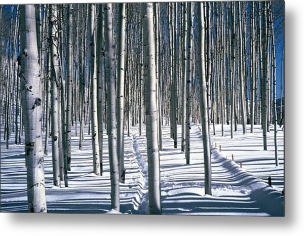 Fence Line Metal Print by Robert Walker