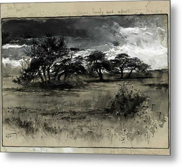 Fenn Thorn-trees, C1887 Metal Print