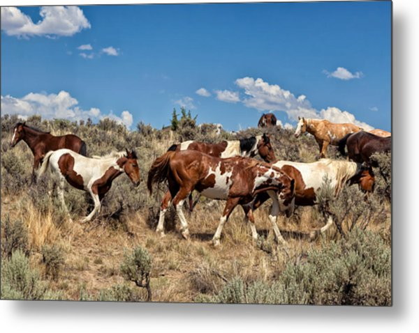 Feral And Free Metal Print