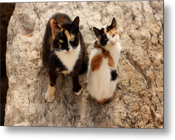 Feral Cat And Kitten Metal Print
