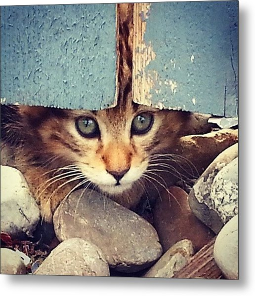 Peek A Boo Kitten Metal Print