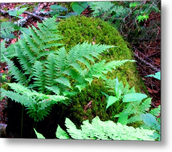 Fern And Moss Metal Print