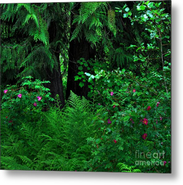 Fern And Wild Roses Metal Print