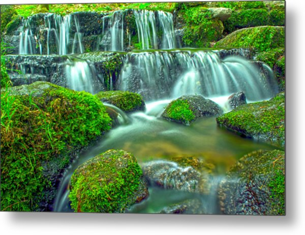 Fern Spring Reflections Of An Overcast Day Metal Print