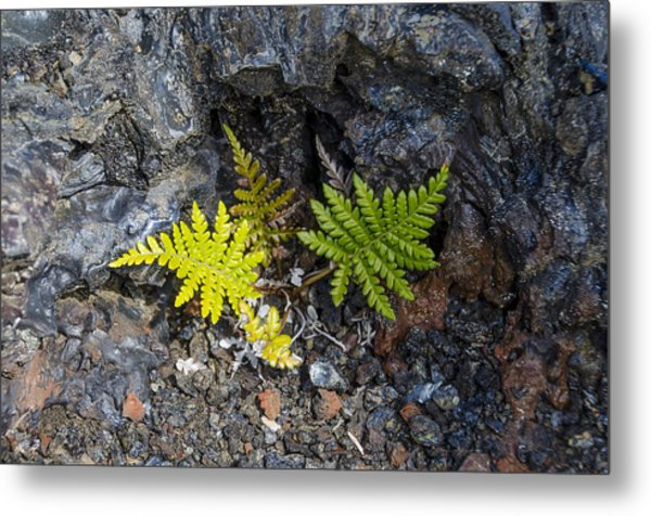 Ferns In Volcanic Rock Metal Print