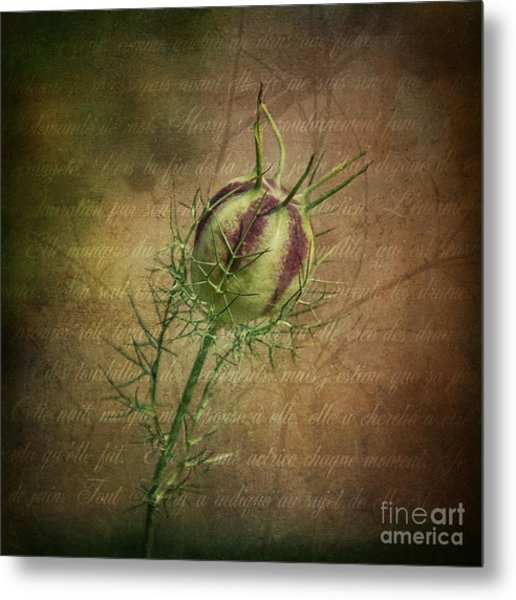Fey Poppy Magic Metal Print