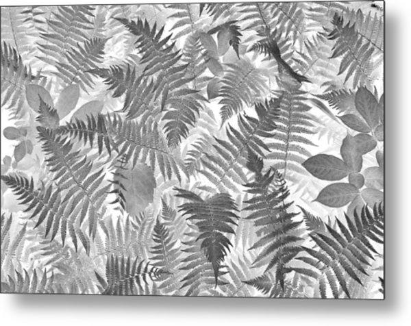 Fiddlehead Ferns Metal Print