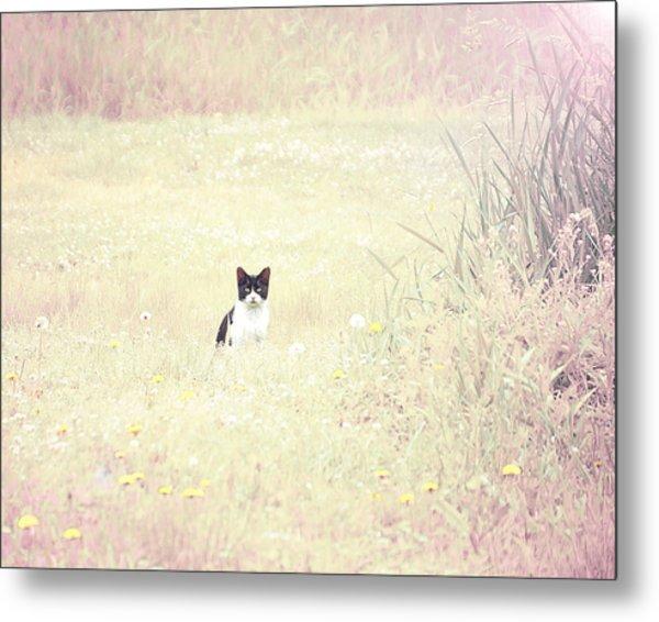 Field Cat Metal Print by Kellie Prowse