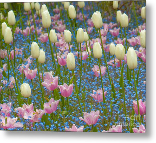 Field Of Blooms Metal Print by Sarah Crites
