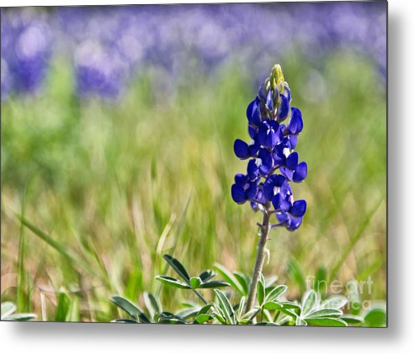 Field Of Blue Metal Print
