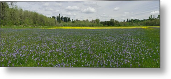 Field Of Camas And Western Buttercup Metal Print by John Higby