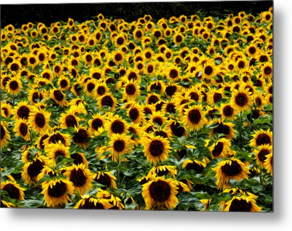 Field Of Flowers Metal Print by Mitchell Brown