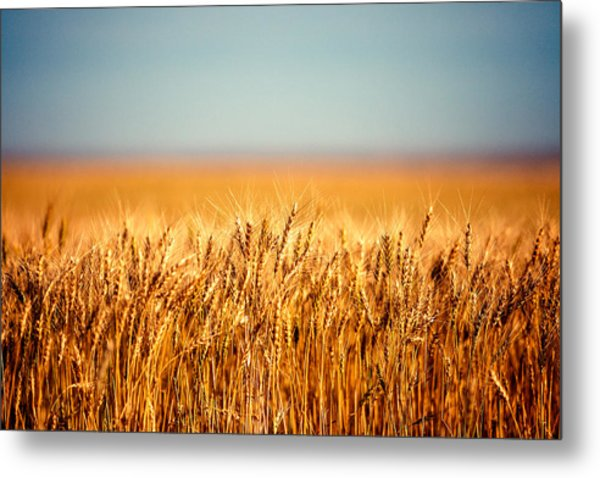 Field Of Wheat Metal Print