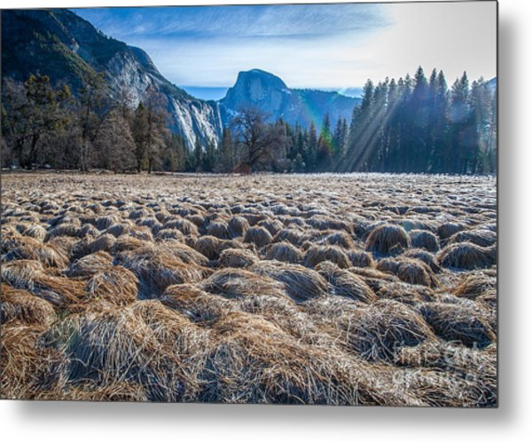 Field View Metal Print