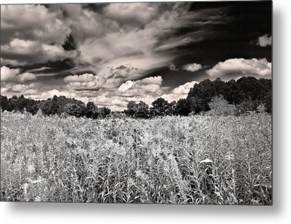 Fields Of Gold And Clouds Metal Print