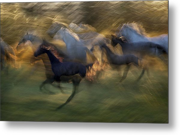 Fiery Gallop Metal Print