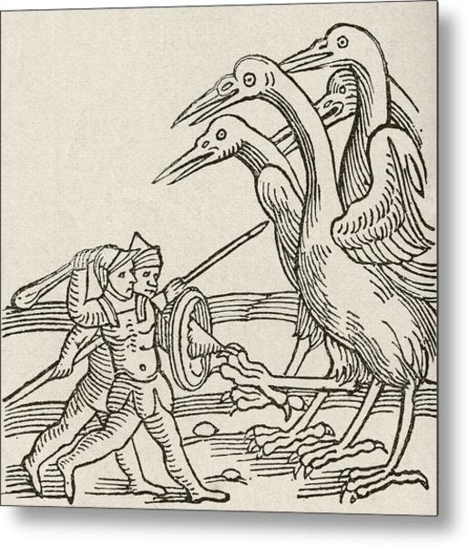 Fight Between Pygmies And Cranes. A Story From Greek Mythology Metal Print
